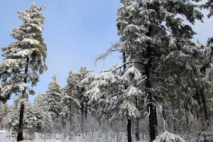 winter-auersberg3