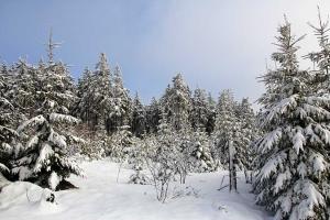 winterlandschap2-auersberg