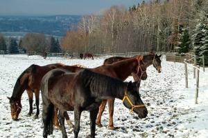 paarden-georgengrun