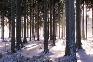 winter-in-het-bos